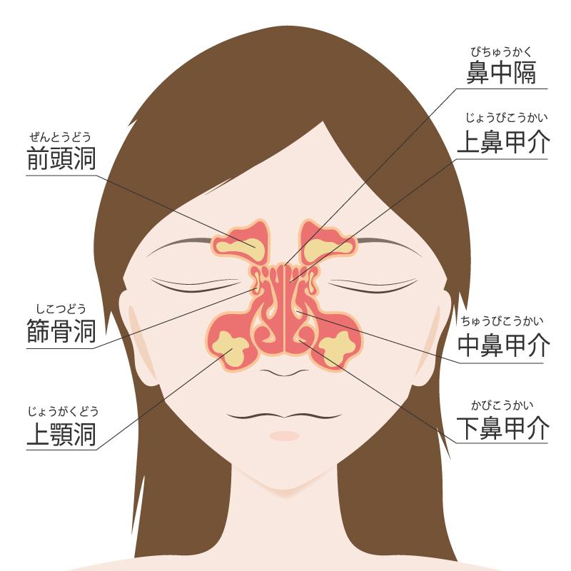 上顎洞の図