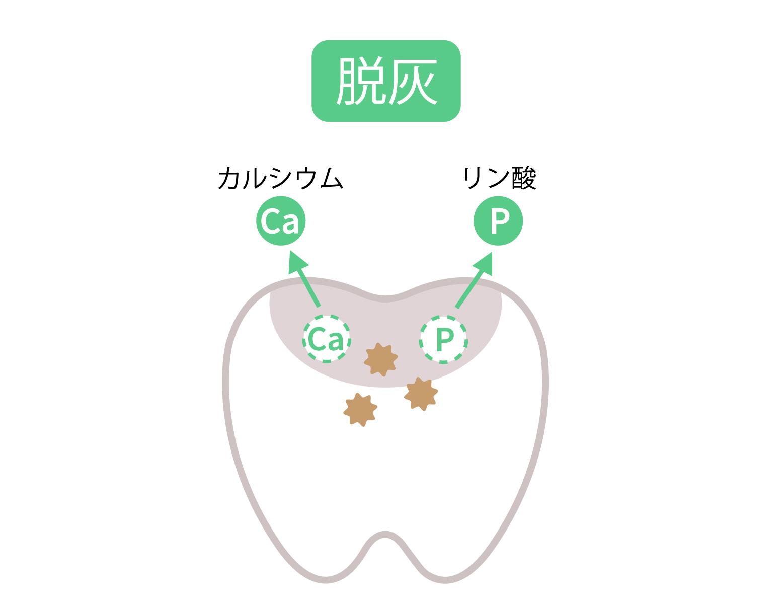 歯が脱灰するとエナメル質のカルシウムとリンが溶け出す