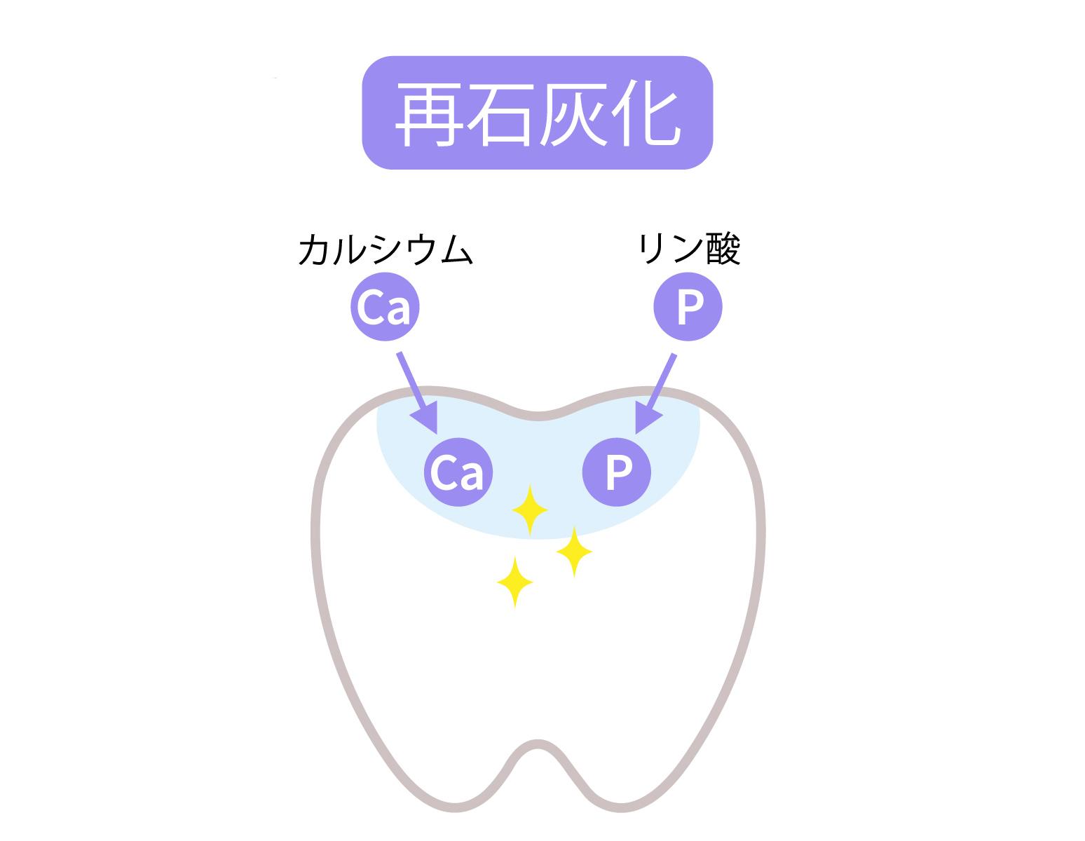 唾液やフッ素により歯の再石灰化が行われるとカルシウムとリンが歯に戻る